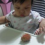 baby rambutan