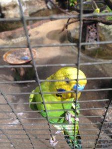 kl bird park 2017