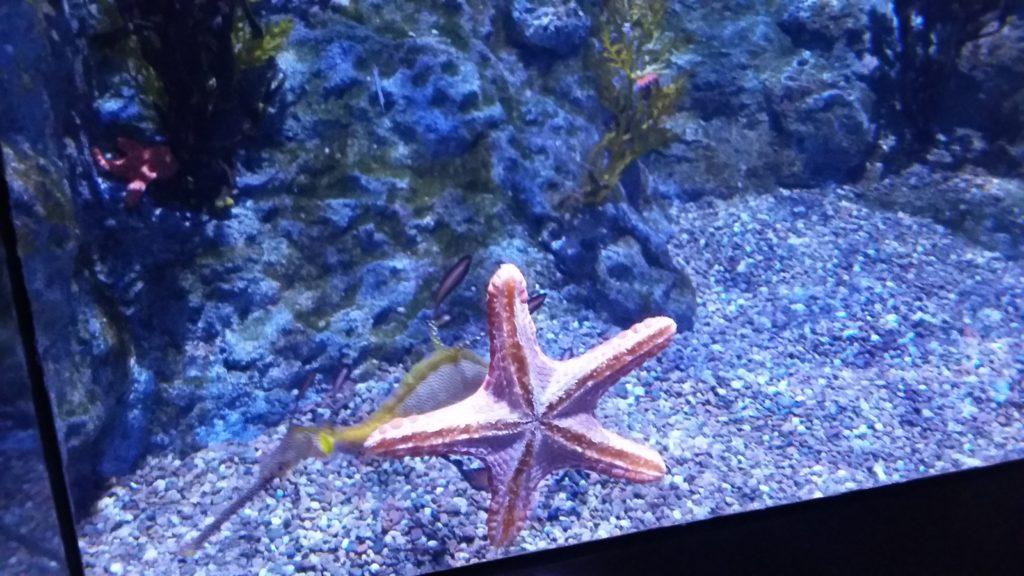 planktons taps aquarium