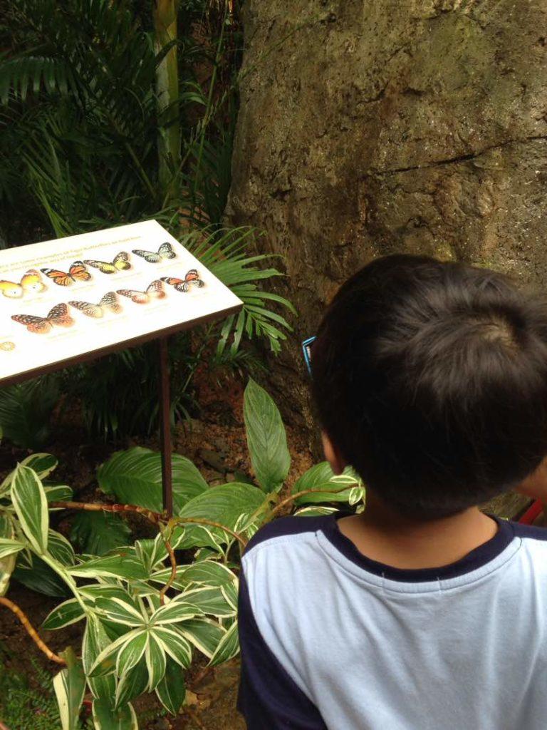 entopia penang butterfly farm